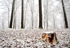 Första dag av snö royaltyfria bilder