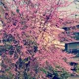 Första dag av våren Royaltyfria Bilder