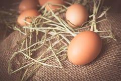 första fokus två för bruna ägg Arkivbilder
