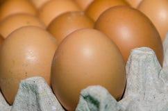 första fokus två för bruna ägg Arkivfoto