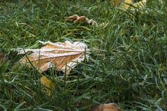 första frost Arkivbilder