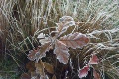 Första frost Royaltyfria Foton