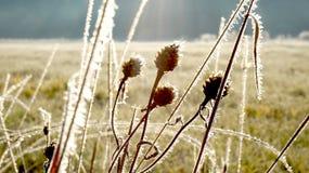 första frost Royaltyfri Fotografi