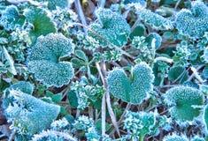 Första frost Arkivbild