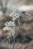 Första frost Royaltyfri Bild