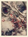 Första frost Arkivfoto