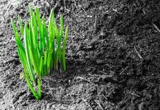 Första gräsplanforsar av våren och smuts Royaltyfria Bilder