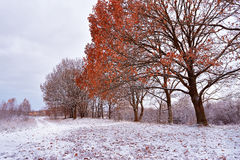 Första insnöat hösten parkerar Nedgångfärger på träden Höst Royaltyfria Bilder