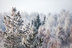 Första insnöat parken för ligganderussia för 33c januari ural vinter temperatur Arkivfoto