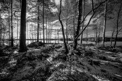 Första insnöat skogen royaltyfria foton