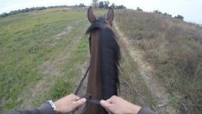 Första personsikt av att rida en häst Punkt av sikten av ryttaren som går på hingsten på naturen Pov-rörelse close upp Arkivfoton