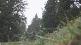 första skogsnow lager videofilmer
