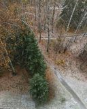 första skogsnow royaltyfri bild