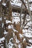 Första snö på att förfalla stammen arkivfoto