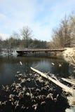 Första snö på den sena Autumn Forest River Fotografering för Bildbyråer