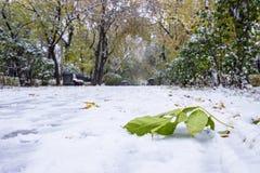 Första snö på trottoar- och gräsplanbladlönnen, storstad Fotografering för Bildbyråer