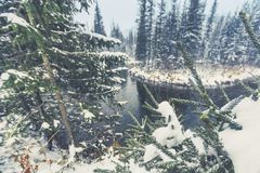 Första snöfall på den Siberian floden för taiga fotografering för bildbyråer
