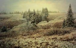 Första Snow Royaltyfria Bilder