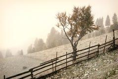 Första snow Arkivbild