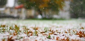 första snow arkivfoto