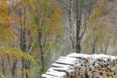 första snow för höst Royaltyfria Foton