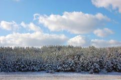första snow royaltyfri fotografi