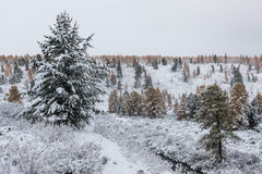 Första Snowfall Royaltyfri Foto