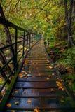 Första steg av hösten Royaltyfria Bilder