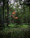 Första steg av hösten Royaltyfri Foto