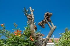 Första träd för världskrig - första träd för världskrigminnesmärke i Makedonien Fotografering för Bildbyråer