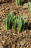 första växter Royaltyfri Fotografi
