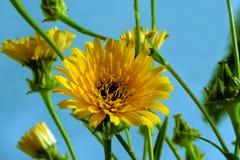 första wild blommafjäder Arkivbilder