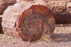 Förstenad skog, Arizona, USA Royaltyfri Fotografi