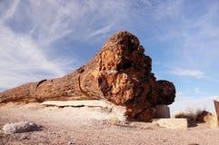 Förstenad skog, Arizona, USA Arkivfoto