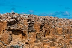 Förstenad skogcloseup Udde Bridgewater, Victoria, Australien Arkivfoto