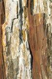 Förstenad Wood detalj 05 Royaltyfria Foton