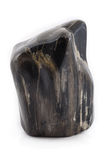 Förstenad wood forntida stycksvartframdel Royaltyfri Foto