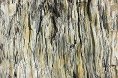 Förstenad wood textur Royaltyfri Fotografi