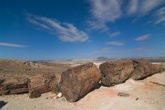 förstenade trän för patagonia Royaltyfri Bild