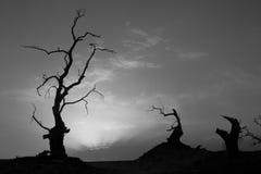 Förstenade Trees i den Taklamakan öknen, Kina royaltyfri foto