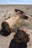förstenas arizona skognationalpark royaltyfria bilder