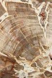 Förstenat trä Royaltyfri Foto