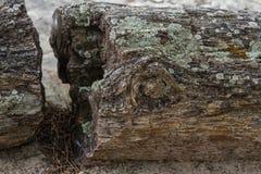 Förstenat trä Royaltyfri Fotografi