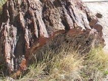 Förstenat trä Arkivbilder