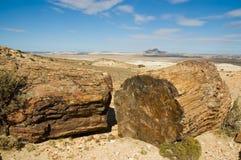 förstenat trä för patagonia royaltyfri bild