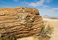förstenat trä för patagonia royaltyfria bilder