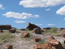 Förstenat trä i öken Arkivfoto