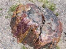 Förstenat trä i förstenade Forest National Park Fotografering för Bildbyråer