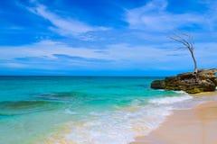 Förstenat träd över en Bahamas strand Arkivfoton