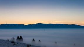Försvinnande träd i den dimmiga skymningen Arkivfoto